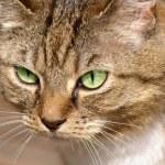 Постер, плакат: Cats eyes