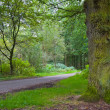 Fresh green forest — Stock Photo