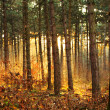 Sun fire forest — Stock Photo