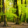 Foto Stock: Summer forest
