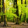 Stockfoto: Summer forest
