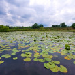 Lily pond with dark clouds — Stock Photo