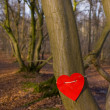 Love tree - Foto de Stock  