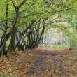 Autumn lane in a forest — Stock Photo
