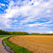 Rural scenery — Stock Photo