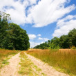 Sandy road — Stock Photo