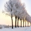 Row of winter trees with pale sunset — Stock Photo