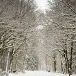 Forest covered with snow and pale sky - Stock Photo