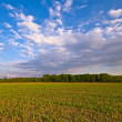 Agriculture farm landscape — Stock Photo