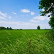 Green pasture and blue sky — Stock Photo #2373914