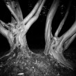 Spooky trees — Stock Photo