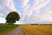 Ağaçlı kırsal köy yolunda — Stok fotoğraf