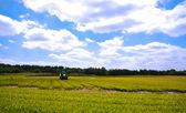 Bright green agriculture farmland — Stock Photo