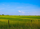 Fresh green pasture and blue sky — Stok fotoğraf