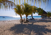 Caribbean shady palm beach — Stock Photo