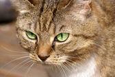 Cats eyes — Stock Photo
