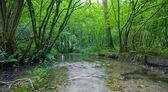 Bosque de verano con arroyo — Foto de Stock