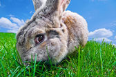 Funny bunny — Stock Photo