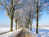 Car view snow landscape lane of trees — Stock Photo