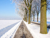 Rows of trees view in a snow landscape — Stock Photo