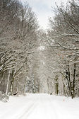 Forest covered with snow and pale sky — Stock Photo