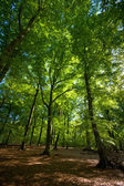 Summer forest — Stock Photo