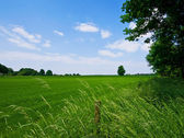 Green pasture and blue sky — Stok fotoğraf