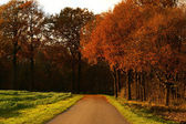 Colorful autumn road — Stock Photo
