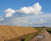 Windmill park with stack of sugar beet — Stock Photo