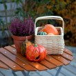 Autumn in the garden — Stock fotografie