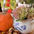 Autumn in the garden — Stock Photo