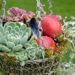 Stock Photo: Autumnal Decorational hanging basket