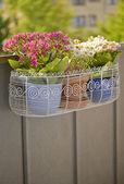 Balcony flower basket — Stock Photo