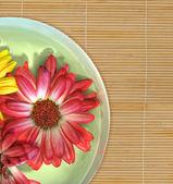 Flores flotantes — Foto de Stock