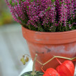 Stock Photo: Purple heather