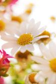 Hazy floral background — Stock Photo