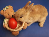Easter bunny and bear hamper with egg — Stock Photo