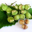 Gathered hazelnuts on white — Stock Photo