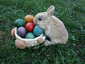 Bunny smell easter eggs in basket — Stock Photo