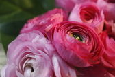 Bouquet of ranunculus — Stock Photo
