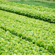 Vegetable plots of vegetables — Stock Photo