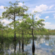 Everglades Landscape 8 — Stock Photo