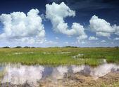 Отражение в Эверглейдс пейзаж — Стоковое фото
