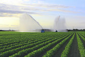 Irrigation Farm Land — Stock Photo