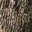 Stock Photo: Oak Treee Bark Background
