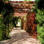 Paradise garden — Stock Photo #2597839