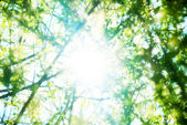 Summer foliage — Stock Photo
