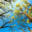 Trees in the sky — Stock Photo