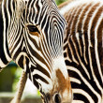 Zoo animal — Stock Photo #2338457