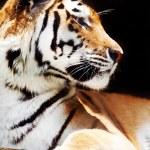 Zoo animal — Stock Photo #2338463